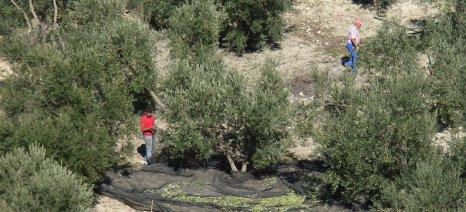Δεν επαρκεί το καθεστώς των μετακλητών εργατών γης για όσους αλλοδαπούς εργάζονται στην Ελλάδα