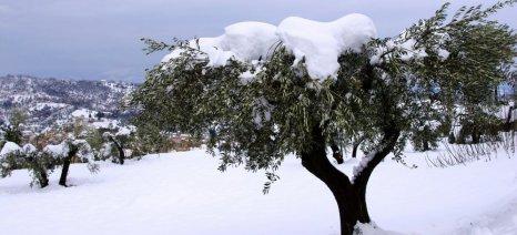Άμεση αποκατάσταση των κλαδιών που έσπασαν από το βάρος του χιονιού συνιστά ο ΕΛΓΟ Δήμητρα