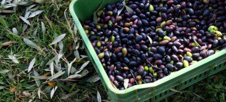 Παρέμβαση για τις κομμένες επιδοτήσεις των ελαιοπαραγωγών της Κέρκυρας