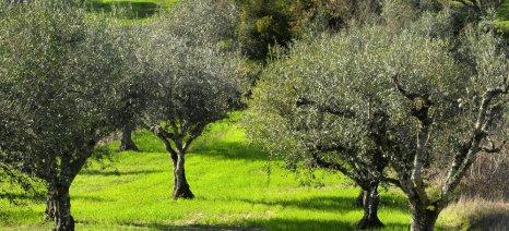 Τροπολογία για την αλλαγή του συστήματος εφαρμογής της καταπολέμησης του δάκου