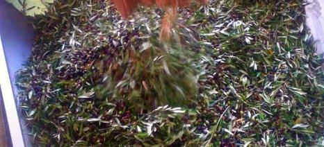 Ο Αγροτικός Συνεταιρισμός Ζαγοράς επενδύει σε ελαιοτριβείο