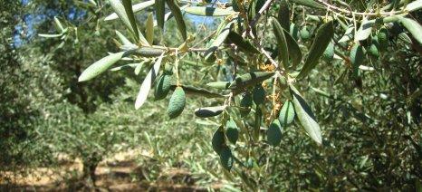 Και του χρόνου θα υπάρξουν επιπτώσεις από την ξηρασία της περιόδου 2015-2016 στην Κρήτη