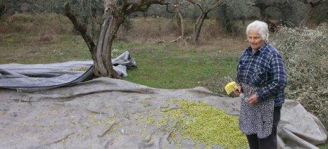 Ερώτηση Γρηγοράκου προς τον Αποστόλου με αίτημα την αποζημίωση των ελαιοπαραγωγών στη Λακωνία