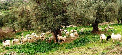Αναρτήθηκαν οι καταστάσεις πληρωμής Βιολογικής Κτηνοτροφίας στη Μεσσηνία