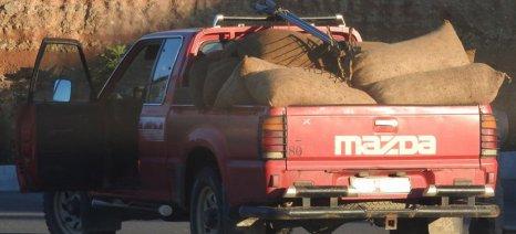 Έκλεψαν ελιές από χωράφι στη Νιγρίτα και έβγαλαν 690 κιλά ελαιόλαδο