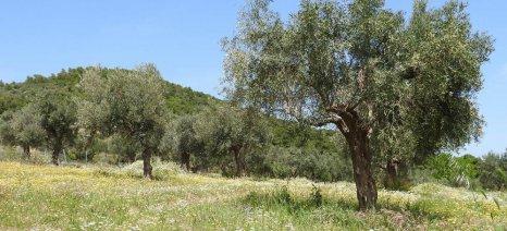 Ημερίδα για δάκο, ξυλέλλα και ίσκα στις Λουσακιές Χανίων