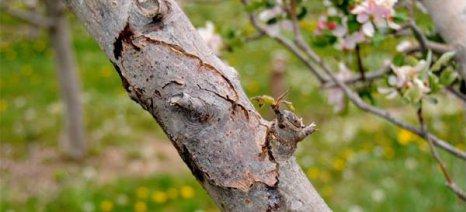 Επεμβάσεις κατά την περίοδο του ληθάργου σε μηλιές και αχλαδιές