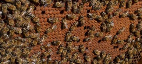 Επιμόρφωση μελισσοκόμων στην Καρδίτσα, με δωρεάν πρόγραμμα κατάρτισης από τις 6 Ιουνίου