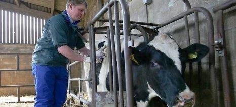 Προληπτικοί εμβολιασμοί στα βοοειδή και στην Ημαθία, μετά από κρούσματα οζώδους δερματίτιδας