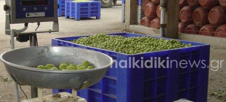 Σε πολύ καλό κλίμα η συνάντηση μεταποιητών και παραγωγών ελιάς Χαλκιδικής