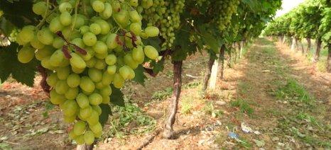Μειωμένη κατά 60% εκτιμάται η παραγωγή οπωροκηπευτικών στη Μούρθια