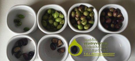 Ασημένιο βραβείο για το Εργαστήριο Γευσιγνωσίας Ελαιολάδου Καλαμάτας στο συνέδριο για την ελαιοκανθάλη