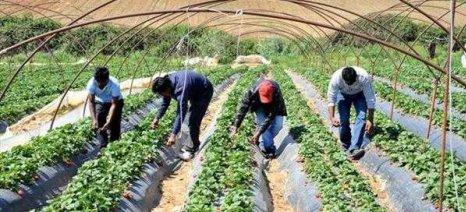 Αλλαγές στην κατανομή αδειών εργασίας αλλοδαπών εργατών γης για τις ανάγκες αγροτικών εκμεταλλεύσεων