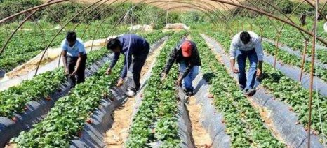 Συστάσεις από Commission για διευκόλυνση μετακινήσεων των εποχικών εργατών γης από χώρα σε χώρα