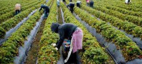 Η κλιματική αλλαγή αυξάνει το κόστος παραγωγής και της λαχανοκομίας