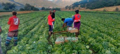 Τι αναφέρει η πρόσφατη εγκύκλιος Πετρόπουλου για το εργόσημο - Τα ποσοστά εισφορών για τον εργάτη γης και για τον εργοδότη αγρότη