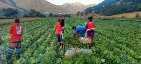 Δρομολογείται η έκδοση υπουργικής απόφασης για επίλυση του ζητήματος των εποχιακών αλλοδαπών εργατών γης