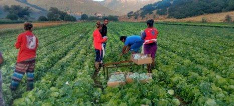 Απλοποίηση της διαδικασίας μετάκλησης αλλοδαπών εργατών γης υπόσχεται ο Πετρόπουλος