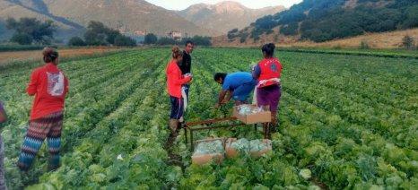 Υποχρεωτική η τήρηση βιβλίου μετακλητών αγρεργατών και αλιεργατών από Τρίτες Χώρες, με απόφαση Αχτσιόγλου