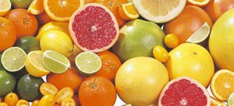 Αύξηση εξαγωγών σε εσπεριδοειδή, αγγούρια μήλα και φράουλες
