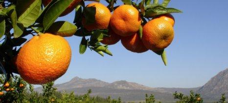 Απάντηση Αποστόλου για τις ζημιές στις καλλιέργειες της Αργολίδας από τον παγετό και την χιονόπτωση