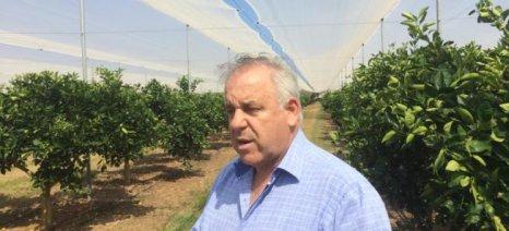 Πρωτοποριακή μέθοδος για την καλλιέργεια εσπεριδοειδών στην Τριφυλία με δικτυοκήπια
