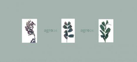 Προσοχή στον περονόσπορο συστήνουν στους καλλιεργητές φακής οι γεωπόνοι της Θεσσαλίας