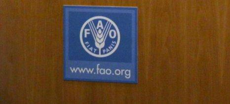 FAO: Μειωμένες οι τιμές των αγροτικών εμπορευμάτων τον Ιανουάριο
