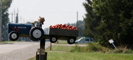 Πάνω από 100.000 τόνους βιομηχανικής ντομάτας θα μεταποιήσουν Κύκνος και Unilever
