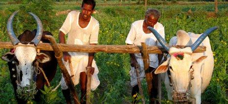 Κονδύλι 525 εκατ. ευρώ από Κομισιόν και Ίδρυμα Γκέιτς για τη γεωργική έρευνα σε Αφρική και Ασία