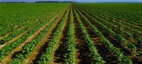Άμεση απάντηση για τη μη καταβολή των ενισχύσεων 2013-2015 ζητούν οι βιοκαλλιεργητές Λακωνίας