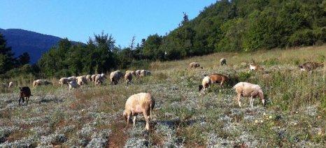 Αύξηση κατά 50% στη στήριξη της κτηνοτροφίας μέσω των συνδεδεμένων ενισχύσεων