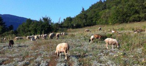 Από 11 έως 22 Απριλίου αιτήσεις για ενίσχυση Βιολογικής Κτηνοτροφίας σε Δυτ. Ελλάδα και Θεσσαλία