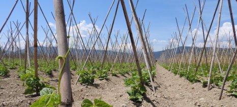 Ενημερωτική ημερίδα για τη καλλιέργεια των φασολιών στο δήμο Νεστορίου
