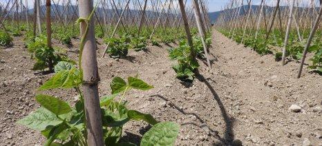 Ανοίγει η αγορά οσπρίων και μεταποιημένων φυτικών πρωτεϊνών, εκτιμά έκθεση της Κομισιόν