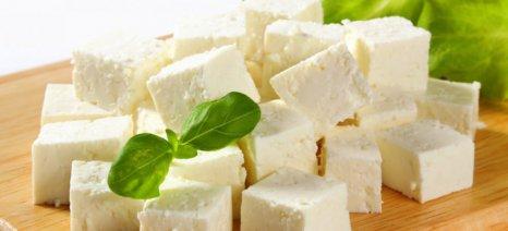 Διευκολύνσεις στους μικρούς παραγωγούς γαλακτοκομικών υπόσχεται η Τελιγιορίδου