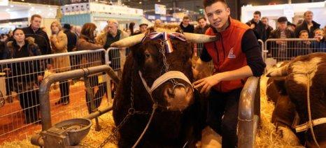 Πέθανε ο Φετάρ, ο βαρύτερος ταύρος στον κόσμο