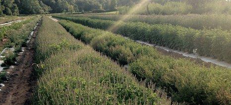 """""""Σχέδιο Ασκληπιός"""" για γεωργία ακριβείας σε αρωματικά και φαρμακευτικά φυτά στα Τρίκαλα"""