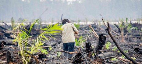 Φυτείες για την παραγωγή φοινικέλαιου ξεφυτρώνουν στα εκατομμύρια στρέμματα καμμένων τροπικών δασών