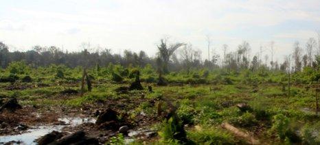Προβληματική και επιβαρυντική για το περιβάλλον και τους λαούς της Ινδονησίας η αλυσίδα εφοδιασμού του φοινικελαίου