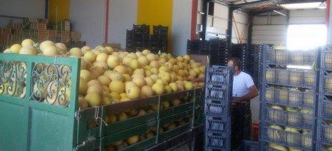 Τι ζητούν οι εξαγωγείς φρούτων για να διευκολυνθεί το εμπόριο και οι μεταφορές