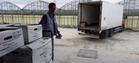 Με αυξητικούς ρυθμούς συνεχίζουν να κινούνται οι εξαγωγές οπωροκηπευτικών