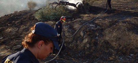 Κάηκαν 30 στρέμματα με ελαιόδεντρα στο Βόλο