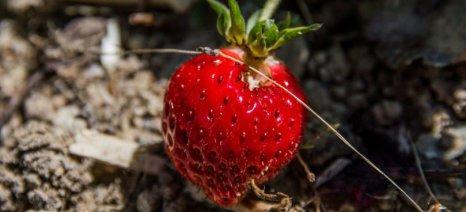 Ανοίγει ο δρόμος για τα ελληνικά φρούτα στη Ρωσία υπό προϋποθέσεις