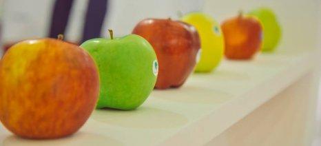 Ολοκληρώθηκε η διεθνής έκθεση φρούτων και λαχανικών Freskon στη Θεσσαλονίκη (φωτορεπορτάζ)