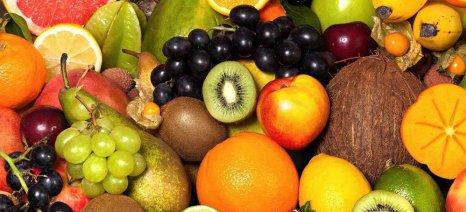 Αυγενάκης: «Θύμα της κυβερνητικής ολιγωρίας το πρόγραμμα διανομής φρούτων και λαχανικών στα σχολεία»