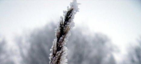 Μέχρι 25 Μαρτίου δηλώσεις ζημίας από παγετό στον Έβρο