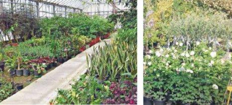 Συνεργασία της Έκθεσης «Ελλάδος Γεύση» με το Θερμοκήπιο Καλλωπιστικών Φυτών του Γεωπονικού Πανεπιστημίου Αθηνών