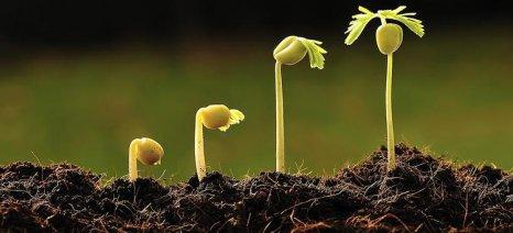 Δρομολογείται η στρατηγική ευαισθητοποίησης για την υγεία των φυτών