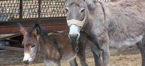 Συστάθηκε ομάδα εργασίας για δημιουργία νομοθετικού πλαισίου για την ευζωία των ιπποειδών